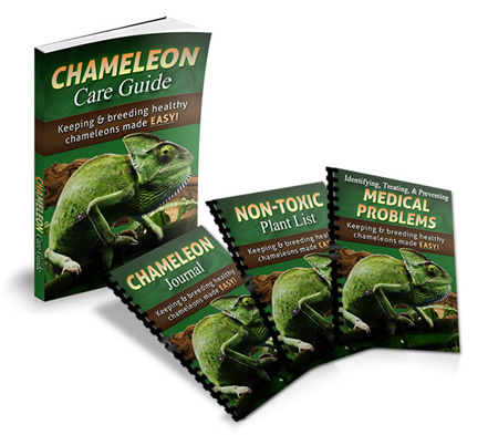 chameleons care and breeding I have had a few questions about how you incubate chameleon eggs its very simple wwwchamalotchameleonscom.